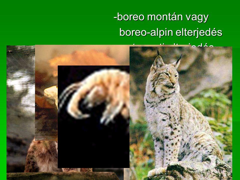 -boreo montán vagy -boreo montán vagy boreo-alpin elterjedés boreo-alpin elterjedés -part menti elterjedés -part menti elterjedés -folyó menti elterjedés -folyó menti elterjedés -szigetszerű elterjedés -szigetszerű elterjedés -helyettesítő elterjedés -helyettesítő elterjedés ●A fajok előfordulását, elterjedését állatföldrajzi területekhez való kötődésük alapján is megadhatjuk.