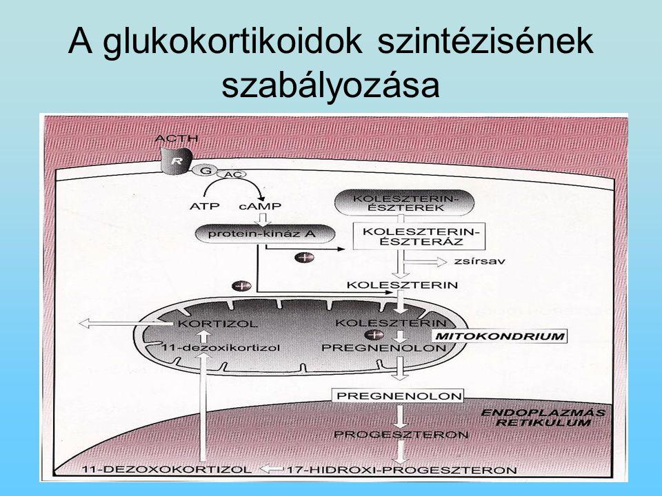 A glukokortikoidok szintézisének szabályozása
