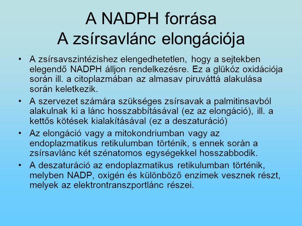 A NADPH forrása A zsírsavlánc elongációja A zsírsavszintézishez elengedhetetlen, hogy a sejtekben elegendő NADPH álljon rendelkezésre. Ez a glükóz oxi