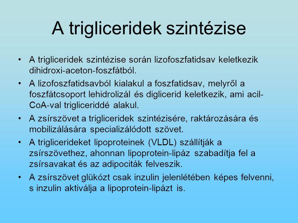 A trigliceridek szintézise A trigliceridek szintézise során lizofoszfatidsav keletkezik dihidroxi-aceton-foszfátból. A lizofoszfatidsavból kialakul a