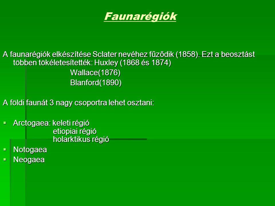 Faunarégiók A faunarégiók elkészítése Sclater nevéhez fűződik (1858).
