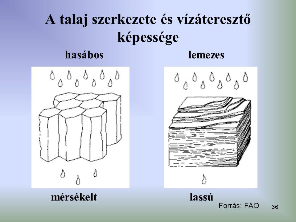 36 A talaj szerkezete és vízáteresztő képessége hasáboslemezes mérsékeltlassú Forrás: FAO