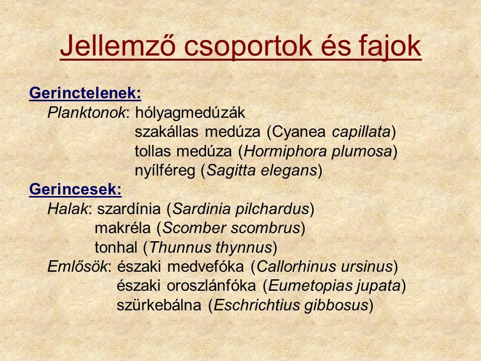 Jellemző csoportok és fajok Gerinctelenek: Planktonok: hólyagmedúzák szakállas medúza (Cyanea capillata) tollas medúza (Hormiphora plumosa) nyílféreg (Sagitta elegans) Gerincesek: Halak: szardínia (Sardinia pilchardus) makréla (Scomber scombrus) tonhal (Thunnus thynnus) Emlősök: északi medvefóka (Callorhinus ursinus) északi oroszlánfóka (Eumetopias jupata) szürkebálna (Eschrichtius gibbosus)