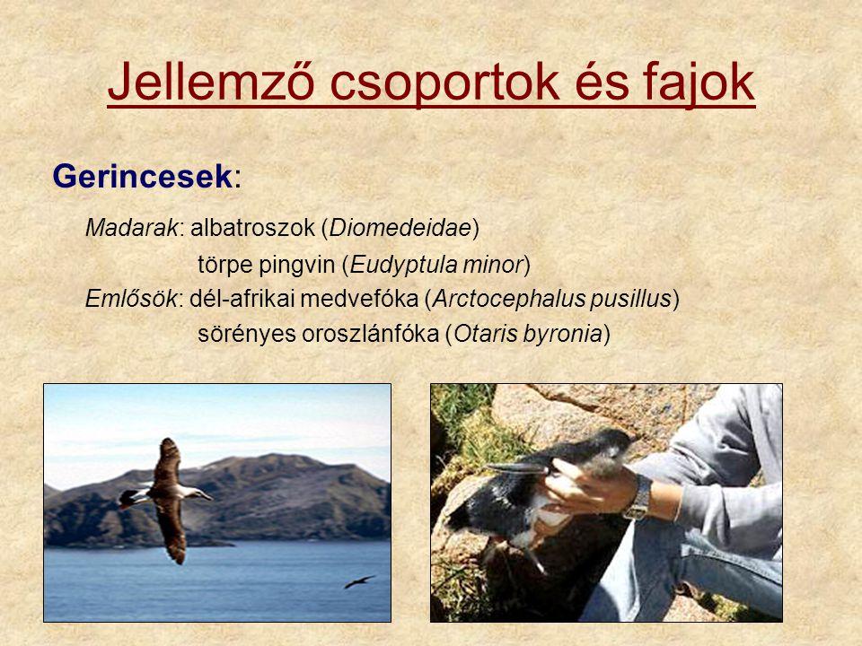 Jellemző csoportok és fajok Gerincesek: Madarak: albatroszok (Diomedeidae) törpe pingvin (Eudyptula minor) Emlősök: dél-afrikai medvefóka (Arctocephalus pusillus) sörényes oroszlánfóka (Otaris byronia)