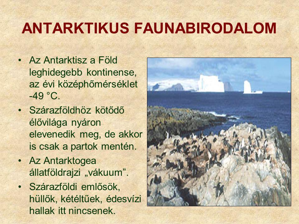 Jellemző csoportok és fajok Emlősök: - déli bálna (Balaena australis) - déli medvefóka (Arctocephalus australis) - déli elefántfóka (Mirounga leonina) - Weddel-fóka (Leptonychotes weddeli) - Ross-fóka (Ommatophoca rossi)