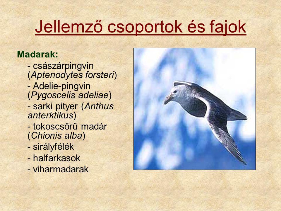 Jellemző csoportok és fajok Madarak: - császárpingvin (Aptenodytes forsteri) - Adelie-pingvin (Pygoscelis adeliae) - sarki pityer (Anthus anterktikus) - tokoscsőrű madár (Chionis alba) - sirályfélék - halfarkasok - viharmadarak