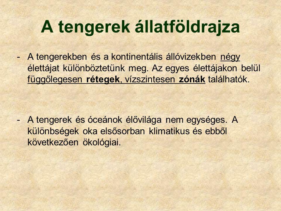 Jellemző csoportok és fajok Gerinctelenek: Plankton: világító medúza (Pelagia noctiluca) Benton: kőkorallok (Madreporaria) Gerincesek: Halak: közönséges repülőhal (Exocoetus volitans) angolna (Anguilla anguilla) Hüllők: tengeri kígyó (Hydrophis platurus) levesteknős (Chelonia mydas) Emlősök: trópusi bálna (Balaenoptera edeni) trópusi delfin (Stenella lonirostris)