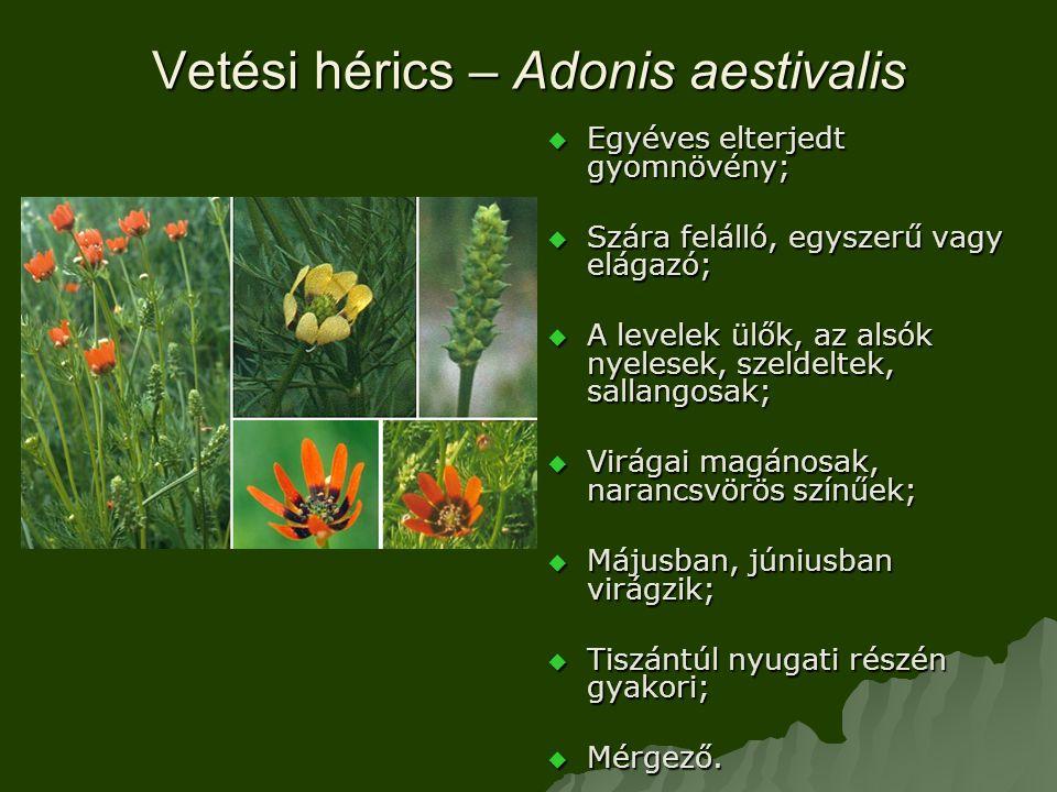 Vetési hérics – Adonis aestivalis  Egyéves elterjedt gyomnövény;  Szára felálló, egyszerű vagy elágazó;  A levelek ülők, az alsók nyelesek, szeldeltek, sallangosak;  Virágai magánosak, narancsvörös színűek;  Májusban, júniusban virágzik;  Tiszántúl nyugati részén gyakori;  Mérgező.