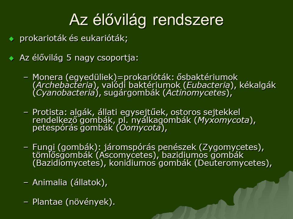 Az élővilág rendszere  prokarioták és eukarióták;  Az élővilág 5 nagy csoportja: –Monera (egyedüliek)=prokarióták: ősbaktériumok (Archebacteria), valódi baktériumok (Eubacteria), kékalgák (Cyanobacteria), sugárgombák (Actinomycetes), –Protista: algák, állati egysejtűek, ostoros sejtekkel rendelkező gombák, pl.