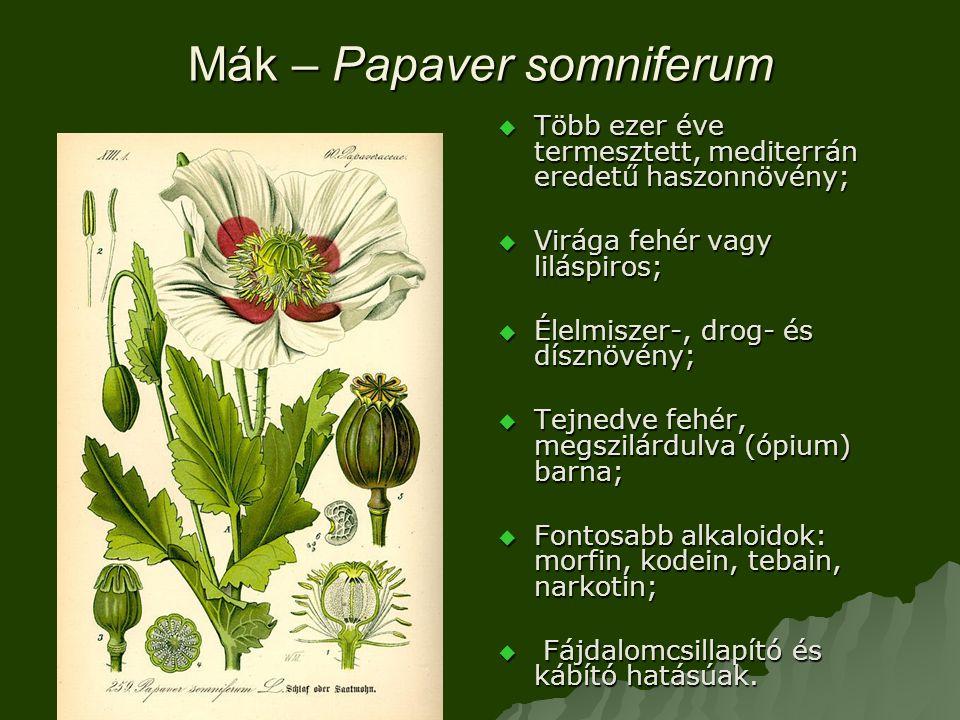 Mák – Papaver somniferum  Több ezer éve termesztett, mediterrán eredetű haszonnövény;  Virága fehér vagy liláspiros;  Élelmiszer-, drog- és dísznövény;  Tejnedve fehér, megszilárdulva (ópium) barna;  Fontosabb alkaloidok: morfin, kodein, tebain, narkotin;  Fájdalomcsillapító és kábító hatásúak.