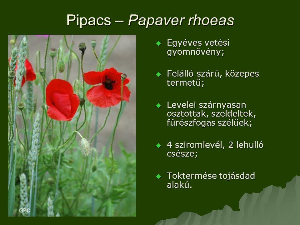 Pipacs – Papaver rhoeas  Egyéves vetési gyomnövény;  Felálló szárú, közepes termetű;  Levelei szárnyasan osztottak, szeldeltek, fűrészfogas szélűek;  4 sziromlevél, 2 lehulló csésze;  Toktermése tojásdad alakú.