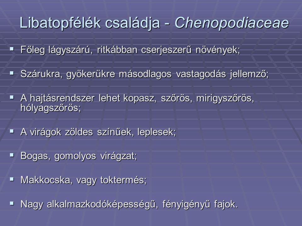 Libatopfélék családja - Chenopodiaceae  Főleg lágyszárú, ritkábban cserjeszerű növények;  Szárukra, gyökerükre másodlagos vastagodás jellemző;  A h