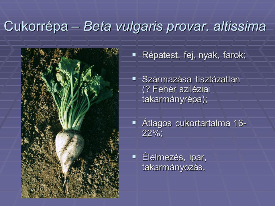 Cukorrépa – Beta vulgaris provar. altissima  Répatest, fej, nyak, farok;  Származása tisztázatlan (? Fehér sziléziai takarmányrépa);  Átlagos cukor