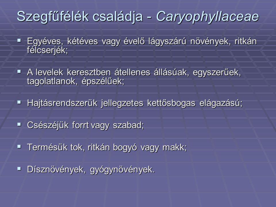 Spenót vagy paraj – Spinacea oleracea