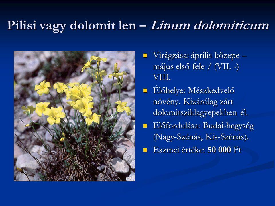 Pilisi vagy dolomit len – Linum dolomiticum Virágzása: április közepe – május első fele / (VII. -) VIII. Élőhelye: Mészkedvelő növény. Kizárólag zárt