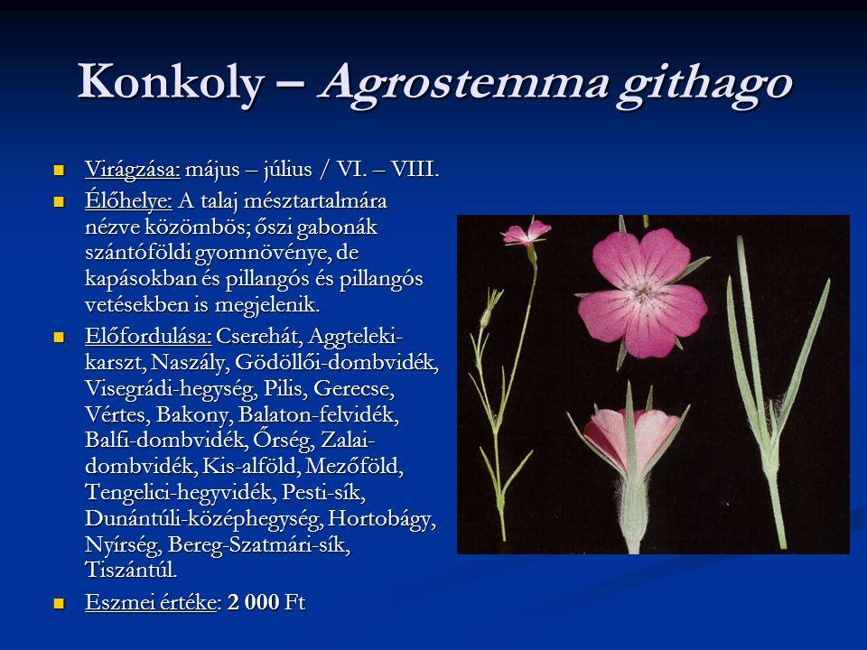Konkoly – Agrostemma githago Virágzása: május – július / VI. – VIII. Virágzása: május – július / VI. – VIII. Élőhelye: A talaj mésztartalmára nézve kö