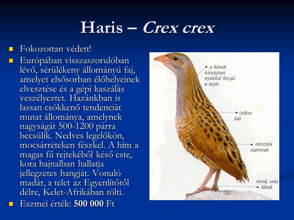 Haris – Crex crex Fokozottan védett! Fokozottan védett! Európában visszaszorulóban lévő, sérülékeny állományú faj, amelyet elsősorban élőhelyeinek elv