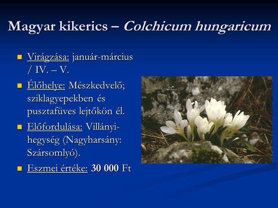 Magyar kikerics – Colchicum hungaricum Virágzása: január-március / IV. – V. Virágzása: január-március / IV. – V. Élőhelye: Mészkedvelő; sziklagyepekbe