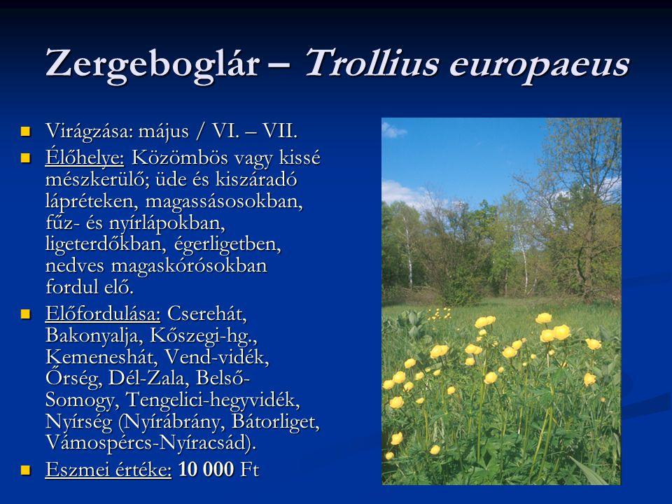 Zergeboglár – Trollius europaeus Virágzása: május / VI. – VII. Virágzása: május / VI. – VII. Élőhelye: Közömbös vagy kissé mészkerülő; üde és kiszárad