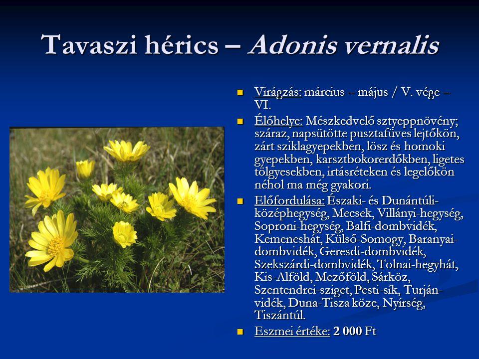 Tavaszi hérics – Adonis vernalis Virágzás: március – május / V. vége – VI. Élőhelye: Mészkedvelő sztyeppnövény; száraz, napsütötte pusztafüves lejtőkö