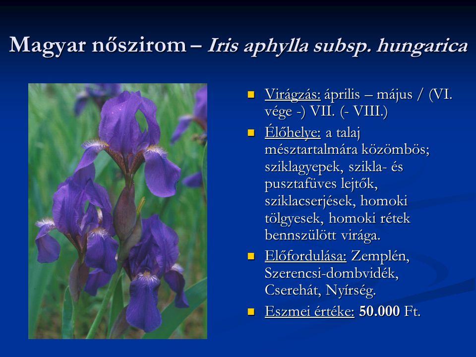 Magyar nőszirom – Iris aphylla subsp. hungarica Virágzás: április – május / (VI. vége -) VII. (- VIII.) Élőhelye: a talaj mésztartalmára közömbös; szi