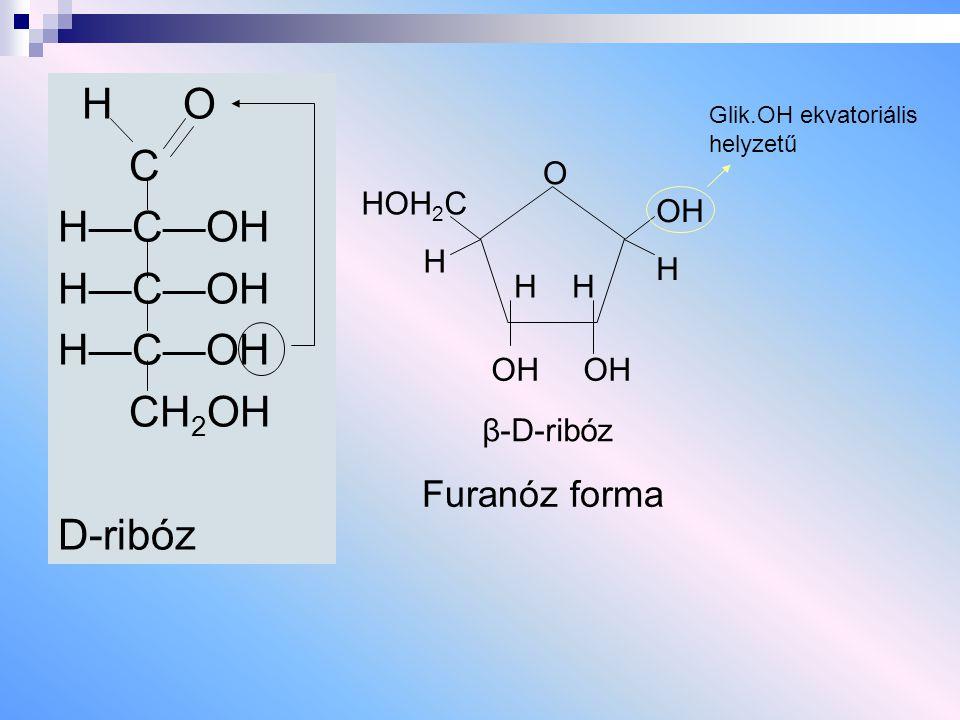 H O C H—C—OH CH 2 OH D-ribóz HOH 2 C H O OH H H H OH OH Furanóz forma Glik.OH ekvatoriális helyzetű β-D-ribóz