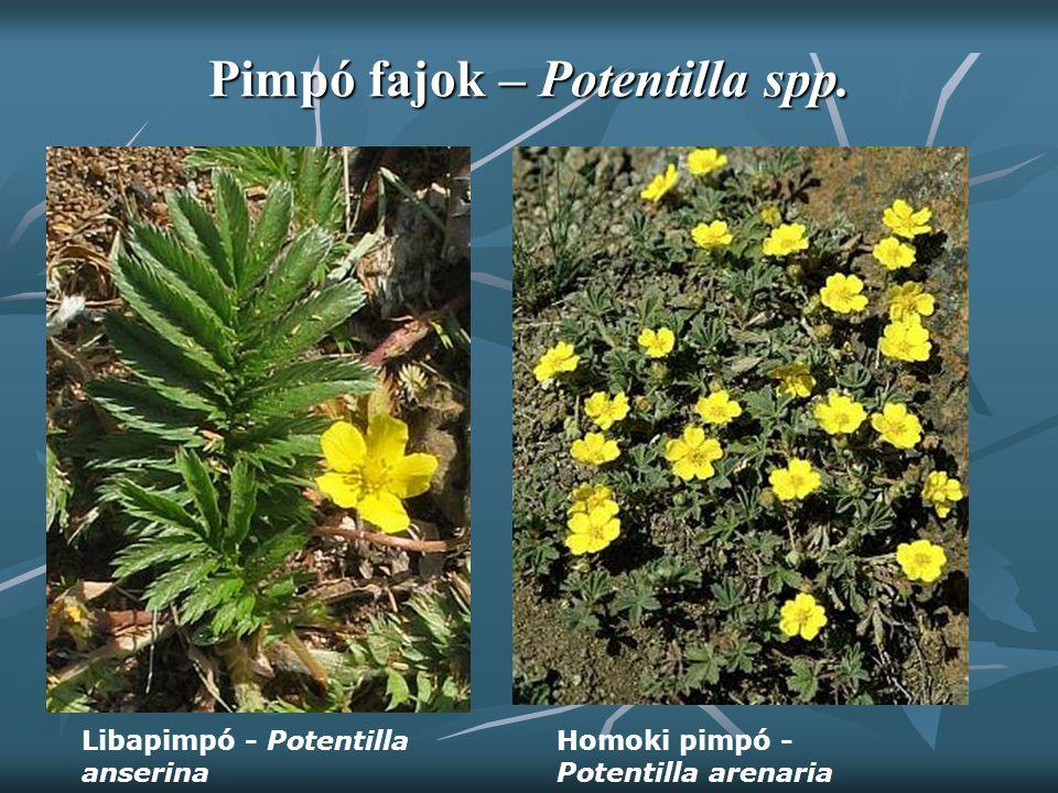 Pimpó fajok – Potentilla spp. Homoki pimpó - Potentilla arenaria Libapimpó - Potentilla anserina
