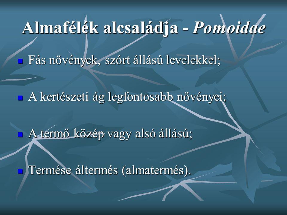Almafélék alcsaládja - Pomoidae Fás növények, szórt állású levelekkel; Fás növények, szórt állású levelekkel; A kertészeti ág legfontosabb növényei; A