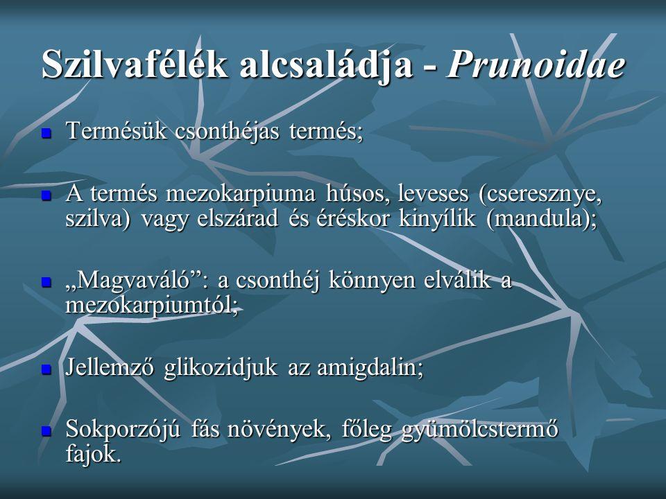 Szilvafélék alcsaládja - Prunoidae Termésük csonthéjas termés; Termésük csonthéjas termés; A termés mezokarpiuma húsos, leveses (cseresznye, szilva) v
