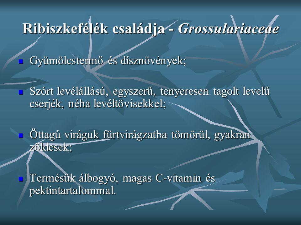 Ribiszkefélék családja - Grossulariaceae Gyümölcstermő és dísznövények; Gyümölcstermő és dísznövények; Szórt levélállású, egyszerű, tenyeresen tagolt
