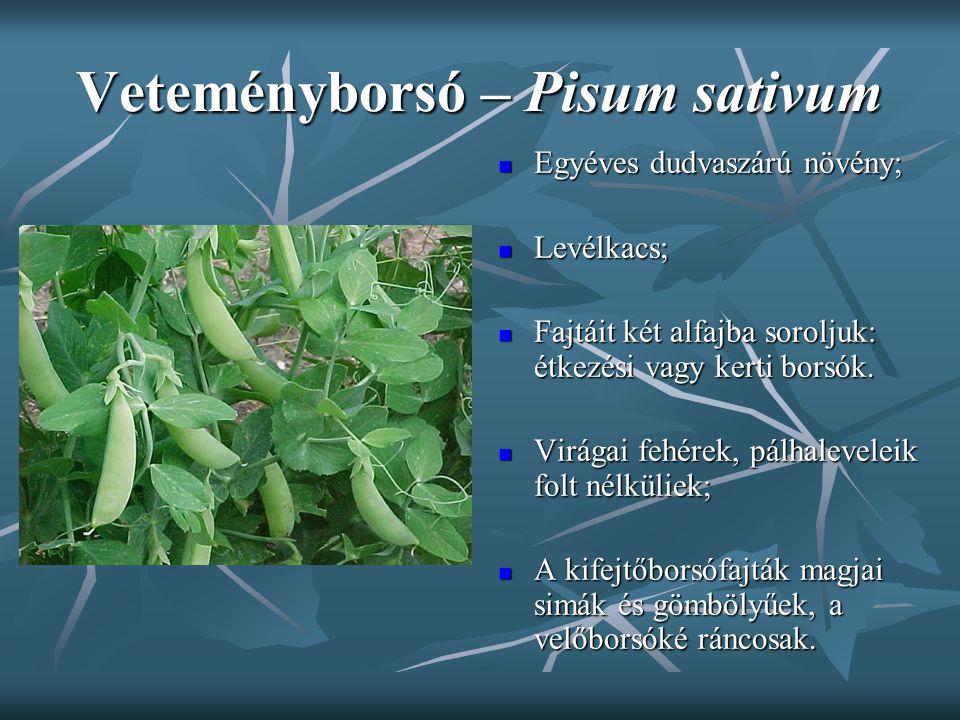 Veteményborsó – Pisum sativum Egyéves dudvaszárú növény; Egyéves dudvaszárú növény; Levélkacs; Levélkacs; Fajtáit két alfajba soroljuk: étkezési vagy
