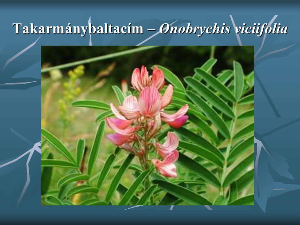 Takarmánybaltacím – Onobrychis viciifolia