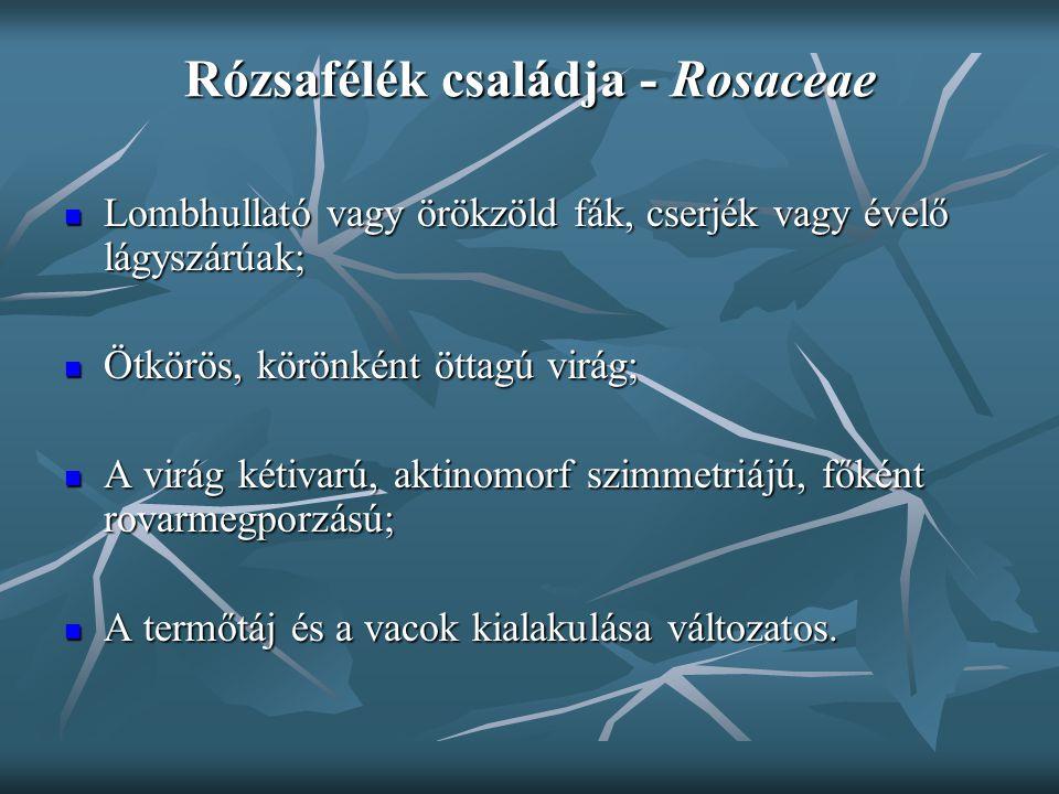"""Szilvafélék alcsaládja - Prunoidae Termésük csonthéjas termés; Termésük csonthéjas termés; A termés mezokarpiuma húsos, leveses (cseresznye, szilva) vagy elszárad és éréskor kinyílik (mandula); A termés mezokarpiuma húsos, leveses (cseresznye, szilva) vagy elszárad és éréskor kinyílik (mandula); """"Magvaváló : a csonthéj könnyen elválik a mezokarpiumtól; """"Magvaváló : a csonthéj könnyen elválik a mezokarpiumtól; Jellemző glikozidjuk az amigdalin; Jellemző glikozidjuk az amigdalin; Sokporzójú fás növények, főleg gyümölcstermő fajok."""