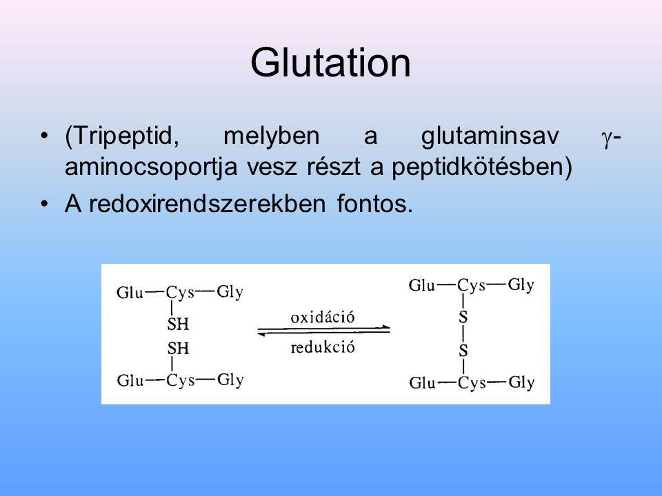 Glutation (Tripeptid, melyben a glutaminsav  - aminocsoportja vesz részt a peptidkötésben) A redoxirendszerekben fontos.
