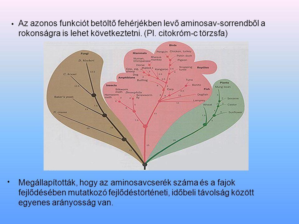 Az azonos funkciót betöltő fehérjékben levő aminosav-sorrendből a rokonságra is lehet következtetni. (Pl. citokróm-c törzsfa) Megállapították, hogy az