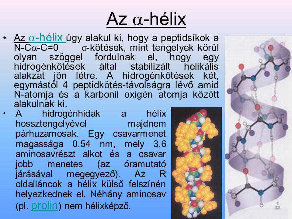 Az  -hélix Az  -hélix úgy alakul ki, hogy a peptidsíkok a N-C  -C=0  -kötések, mint tengelyek körül olyan szöggel fordulnak el, hogy egy hidrogénk