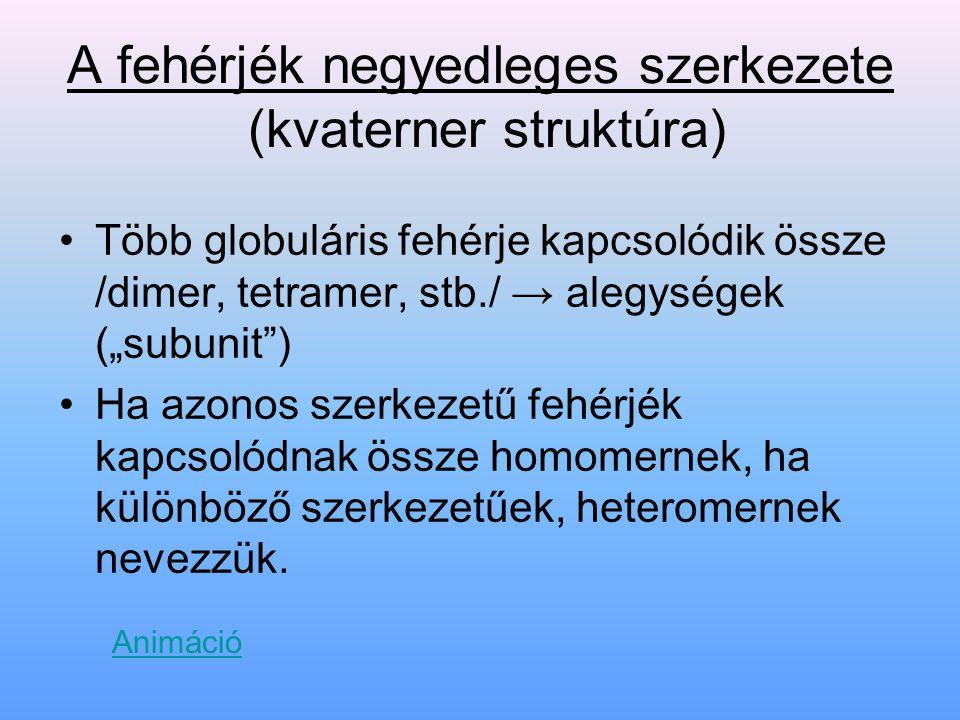 """A fehérjék negyedleges szerkezete (kvaterner struktúra) Több globuláris fehérje kapcsolódik össze /dimer, tetramer, stb./ → alegységek (""""subunit"""") Ha"""