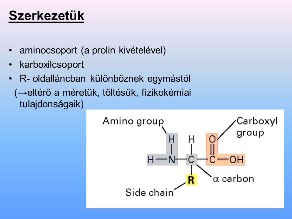 Szerkezetük aminocsoport (a prolin kivételével) karboxilcsoport R- oldalláncban különböznek egymástól (→eltérő a méretük, töltésük, fizikokémiai tulaj