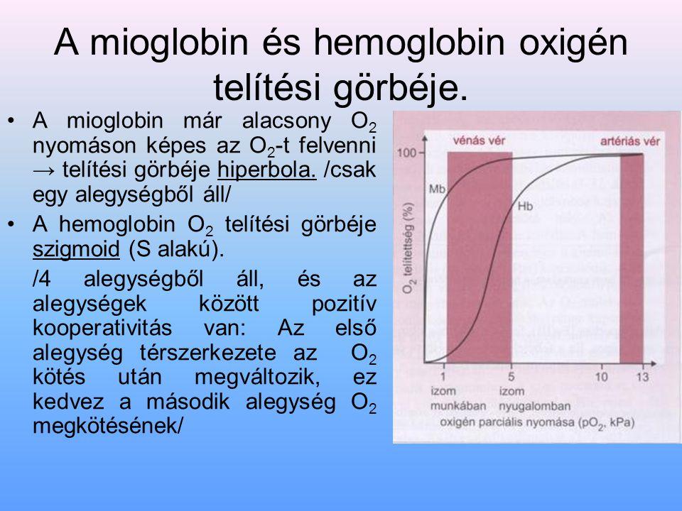 A mioglobin és hemoglobin oxigén telítési görbéje. A mioglobin már alacsony O 2 nyomáson képes az O 2 -t felvenni → telítési görbéje hiperbola. /csak