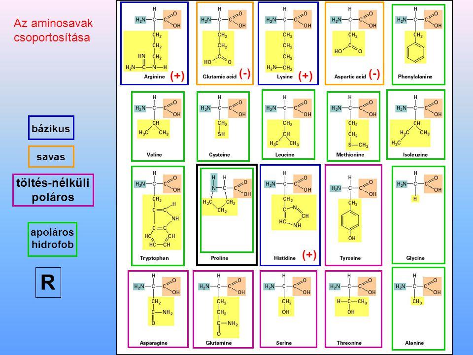 Néhány aminosav térszerkezete Alanin izoleucin fenilalanin szerin glutamin aszpartátlizin