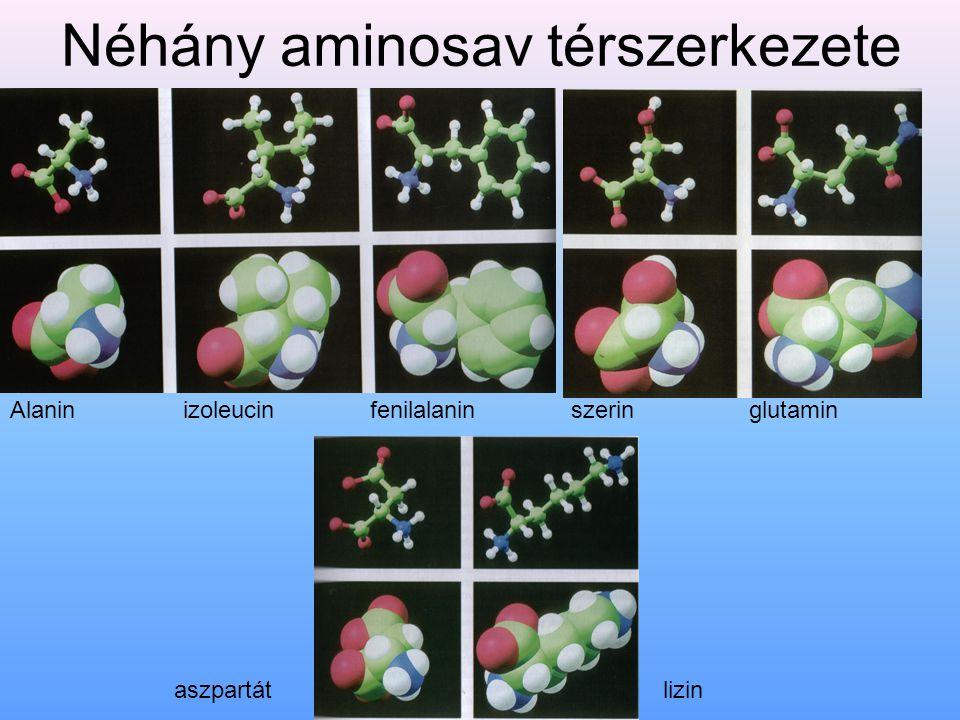 A fehérjék csoportosítása Biológiai aktivitás alapján Enzimek (pepszin, glükóz-foszfát-izomeráz) Védőfehérjék(immunglobulinok) Transzportfehérjék (hemoglobin, mioglobin, transzferrin (vas szállítás) szérumalbumin(zsírsavak)) Tartalékfehérjék (ovalbumin (tojásfehérje) kazein (tejfehérje) ferritin (vas) gliadin (búza) zein (kukorica) ) Hormonok (inzulin, ACTH) Szerkezeti fehérjék (kollagén, elasztin, keratin) Kontraktilis fehérjék (aktin, miozin) Toxinok (kígyómérgek, diftériatoxin) a sejthártya lipidjeinek bontásával hemolízist idéznek elő.