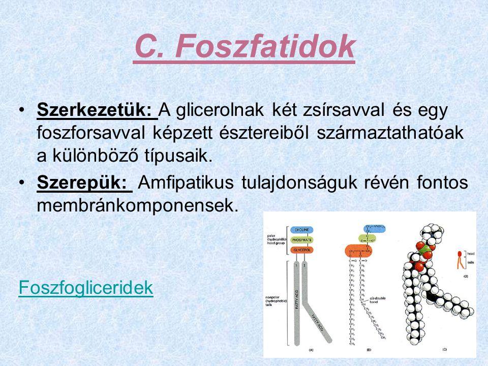 C. Foszfatidok Szerkezetük: A glicerolnak két zsírsavval és egy foszforsavval képzett észtereiből származtathatóak a különböző típusaik. Szerepük: Amf