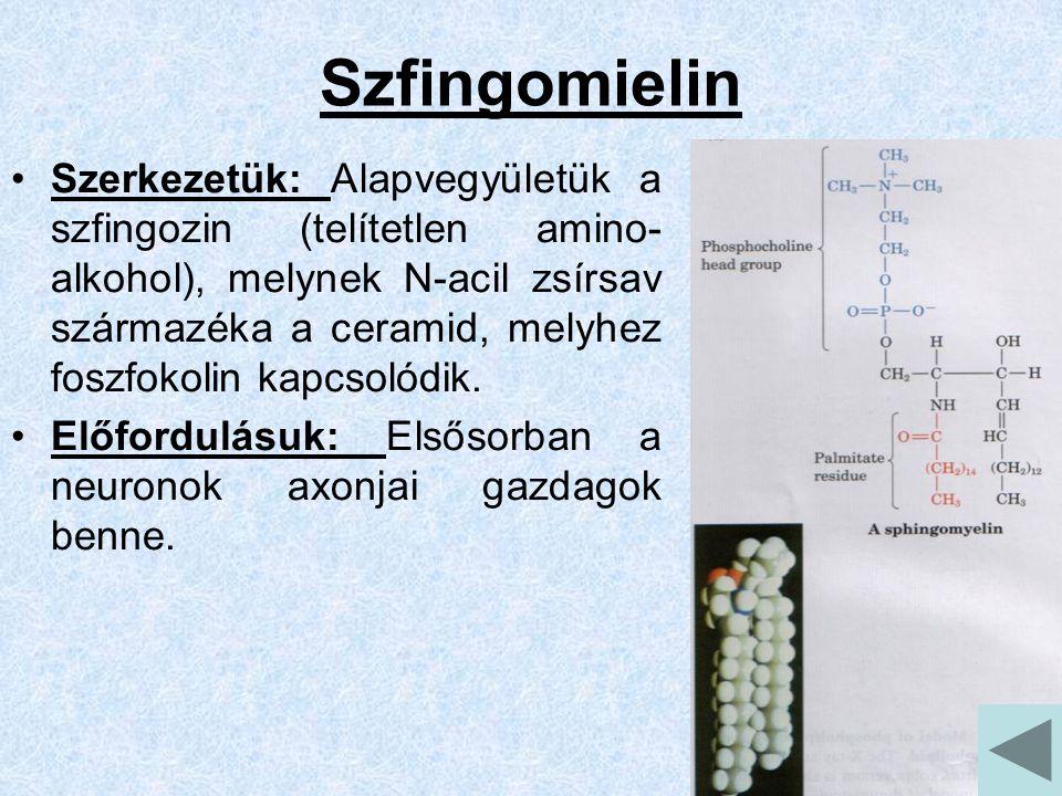 Szfingomielin Szerkezetük: Alapvegyületük a szfingozin (telítetlen amino- alkohol), melynek N-acil zsírsav származéka a ceramid, melyhez foszfokolin kapcsolódik.