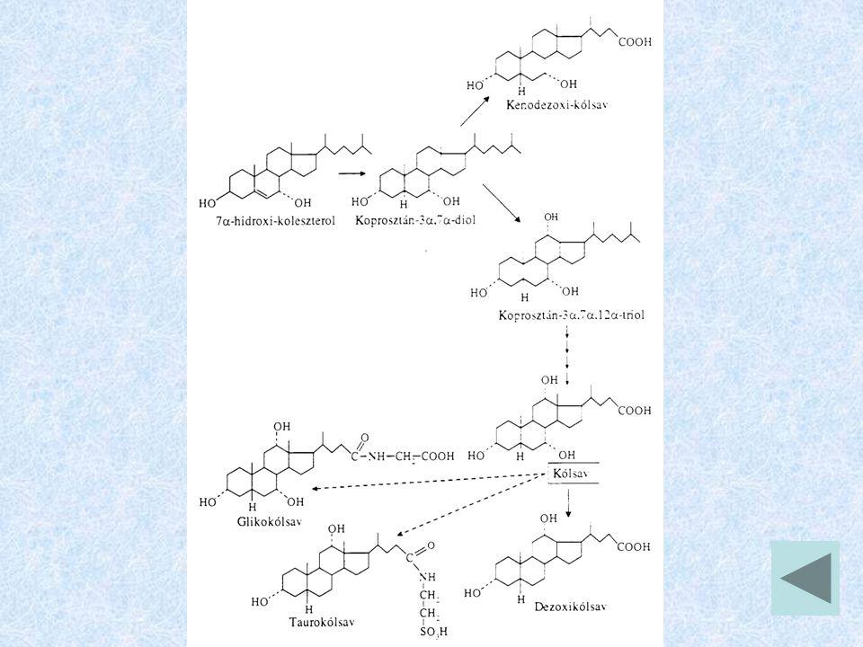 Szteránvázas hormonok főbb szerepei 1.Glükokortikoidok (pl.