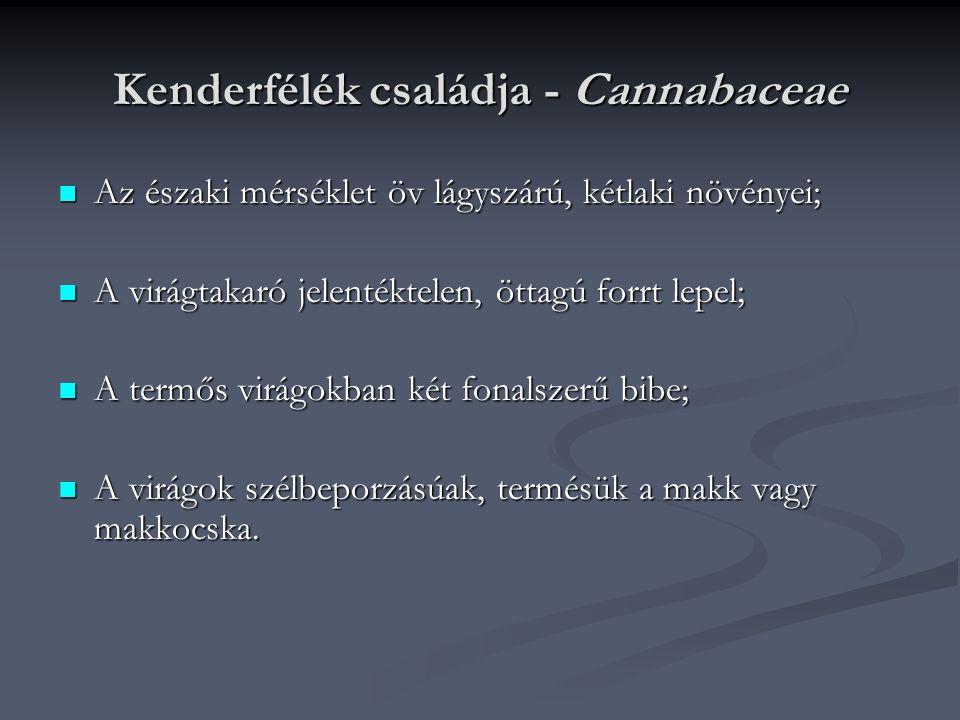 Kenderfélék családja - Cannabaceae Az északi mérséklet öv lágyszárú, kétlaki növényei; Az északi mérséklet öv lágyszárú, kétlaki növényei; A virágtaka