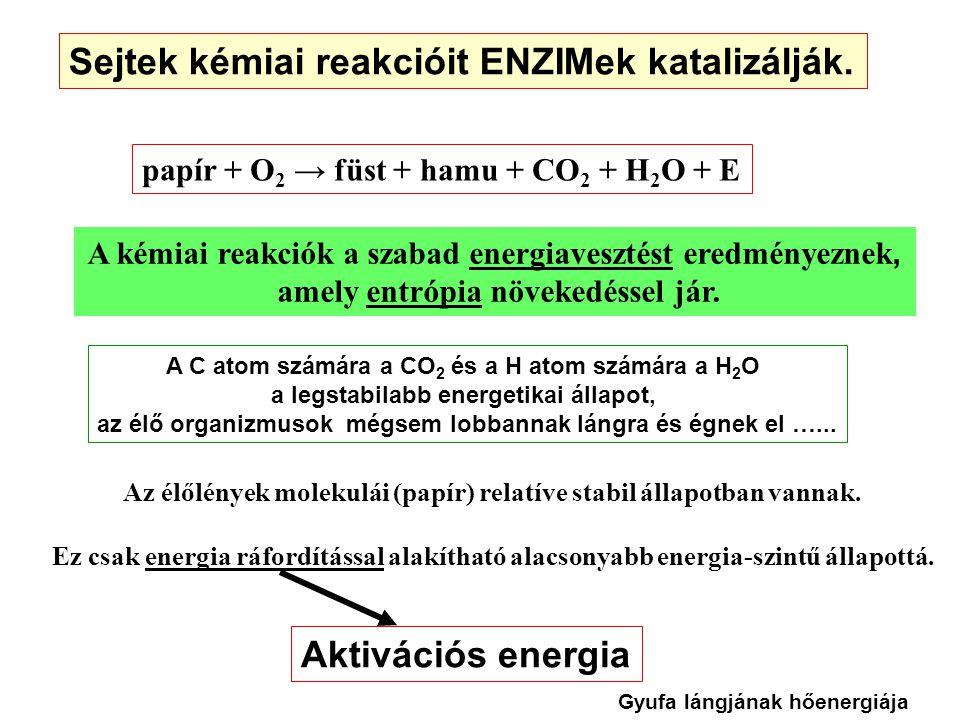 Sejtek kémiai reakcióit ENZIMek katalizálják.
