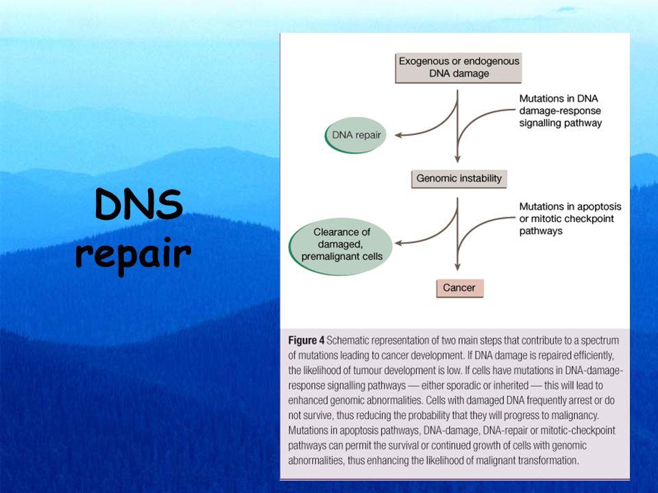 DNS repair