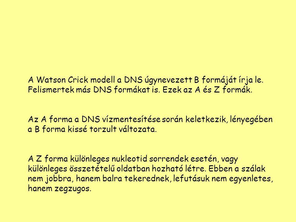 A Watson Crick modell a DNS úgynevezett B formáját írja le. Felismertek más DNS formákat is. Ezek az A és Z formák. Az A forma a DNS vízmentesítése so