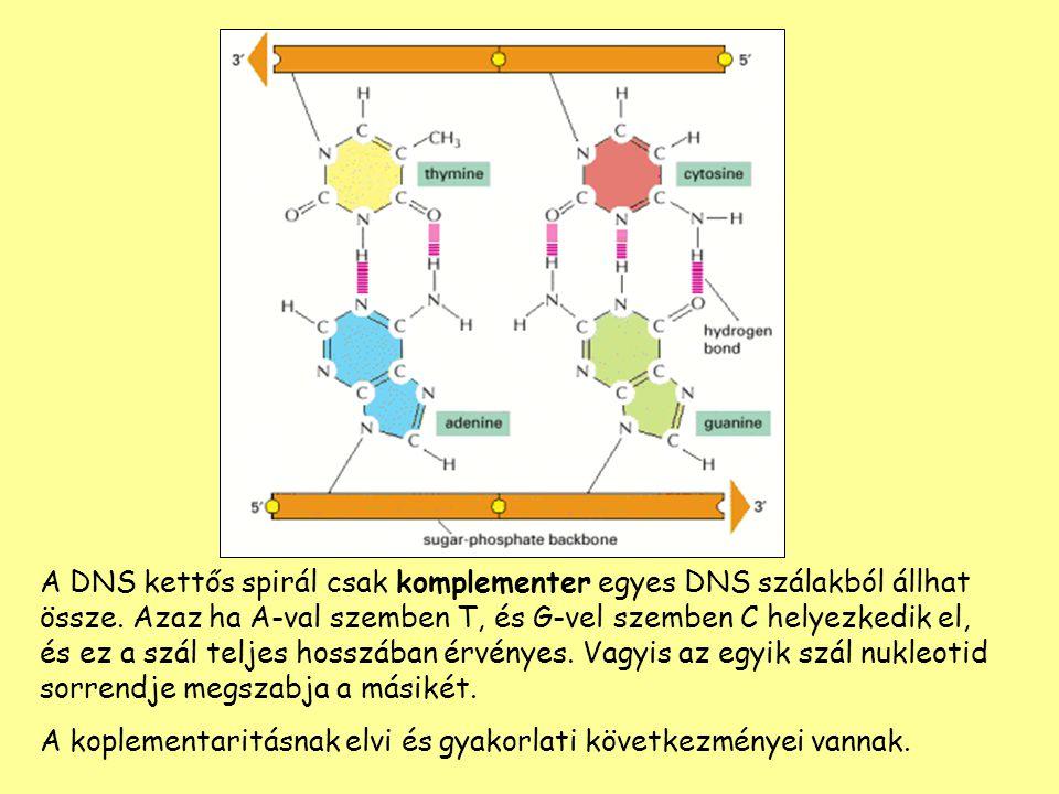 A DNS kettős spirál csak komplementer egyes DNS szálakból állhat össze. Azaz ha A-val szemben T, és G-vel szemben C helyezkedik el, és ez a szál telje
