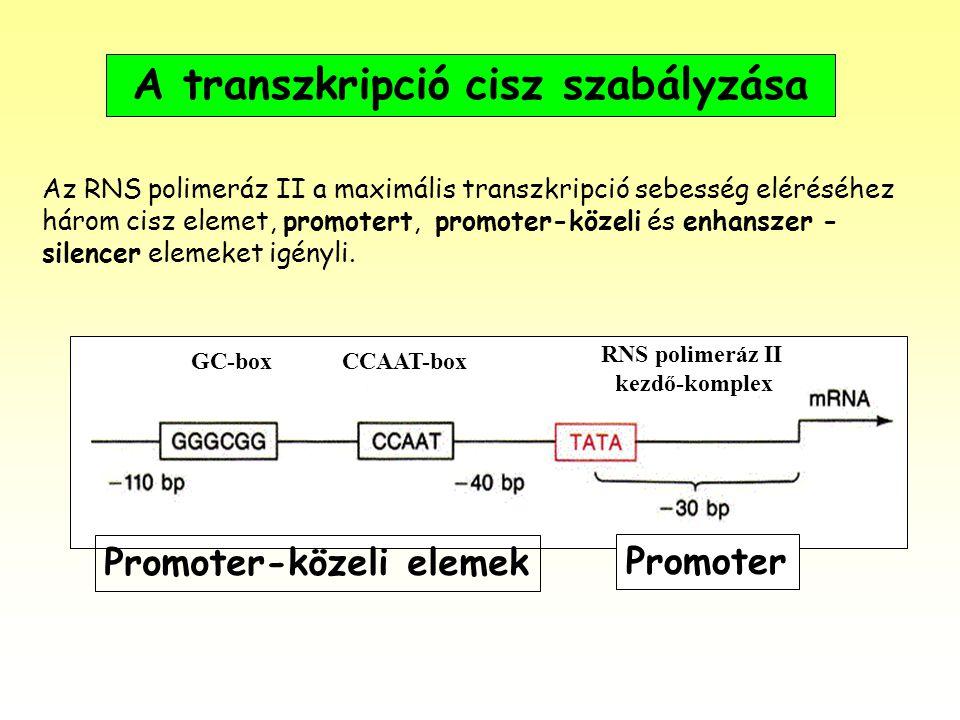 A transzkripció cisz szabályzása Az RNS polimeráz II a maximális transzkripció sebesség eléréséhez három cisz elemet, promotert, promoter-közeli és en